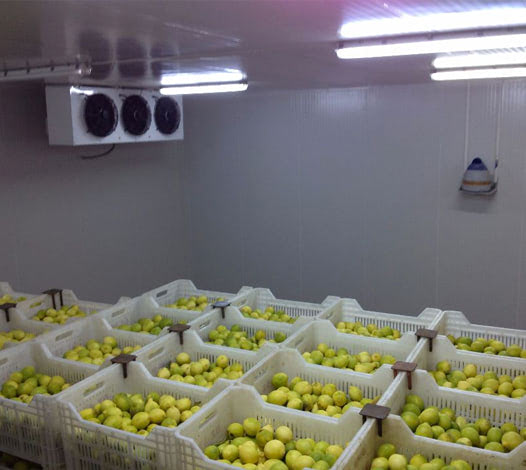 Cold Storage For Fruit&Vegetables